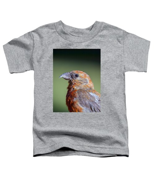 Red Crossbill Toddler T-Shirt by Derek Holzapfel