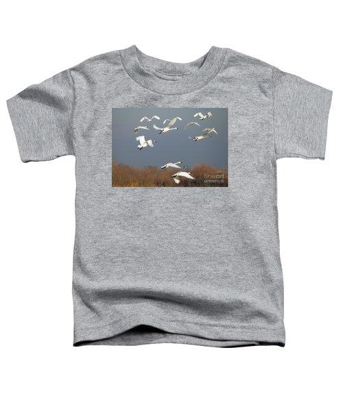 Tundra Swan Takeoff Toddler T-Shirt