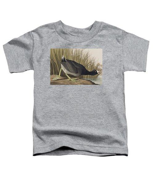 American Coot Toddler T-Shirt
