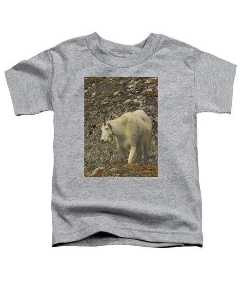 Mountain Goat Ewe Toddler T-Shirt