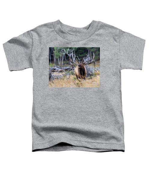 Raging Bull Toddler T-Shirt