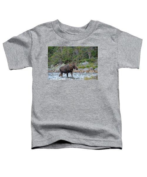 Young Bull Moose Toddler T-Shirt