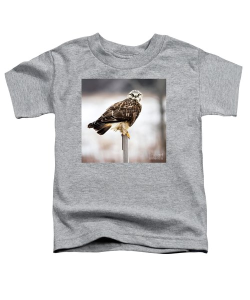 Rough-legged Hawk Toddler T-Shirt