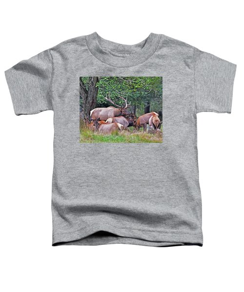 Royal Roosevelt Bull Elk Toddler T-Shirt