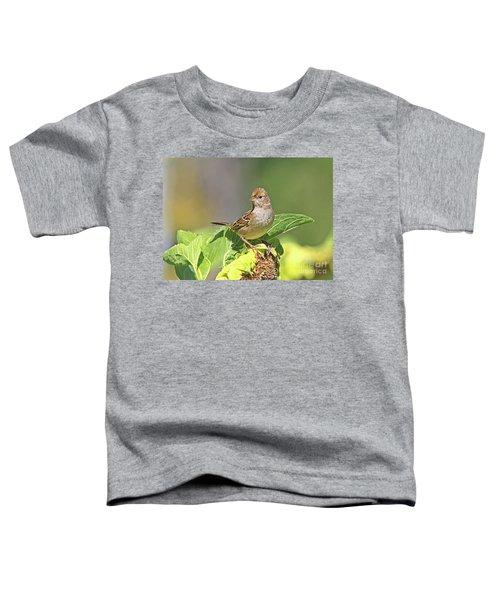 Golden -crowned Sparrow Toddler T-Shirt
