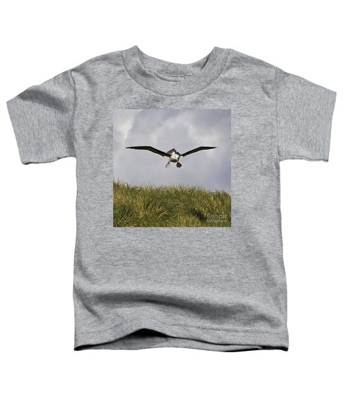 Black-browed Albatross Toddler T-Shirt by Jean-Louis Klein & Marie-Luce Hubert