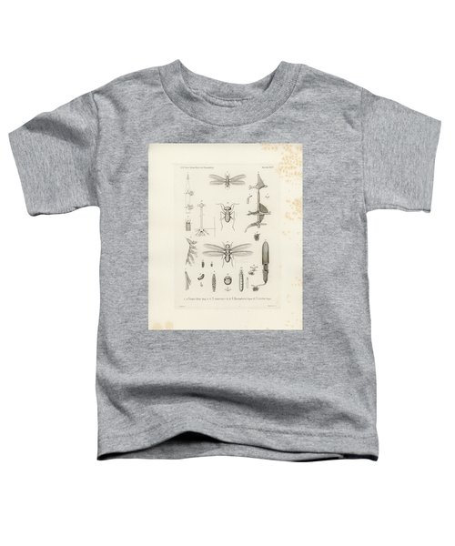 African Termites And Their Anatomy Toddler T-Shirt