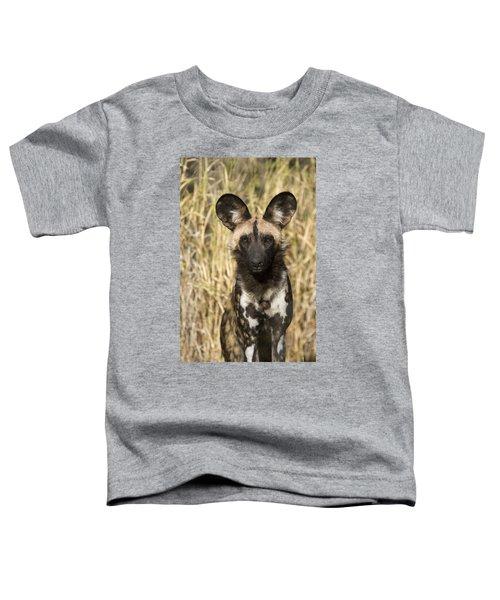 African Wild Dog Okavango Delta Botswana Toddler T-Shirt