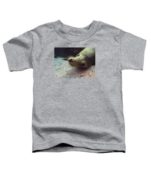 Am I Cute? Asks The Sea Lion Toddler T-Shirt
