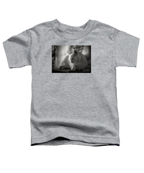 And The Sun Still Shines On My Cat Toddler T-Shirt