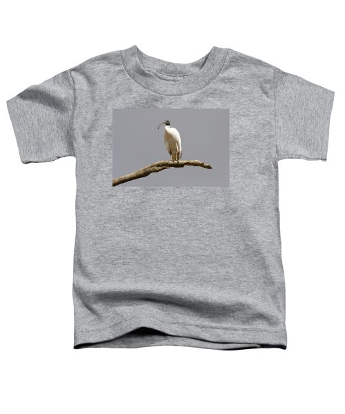 Australian White Ibis Perched Toddler T-Shirt