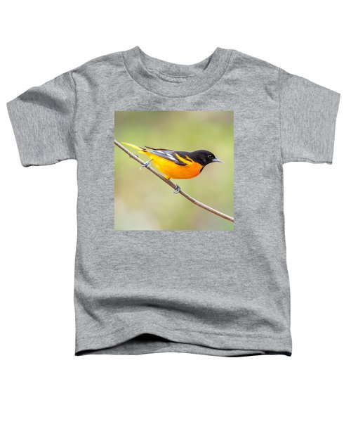 Baltimore Oriole Toddler T-Shirt by Paul Freidlund