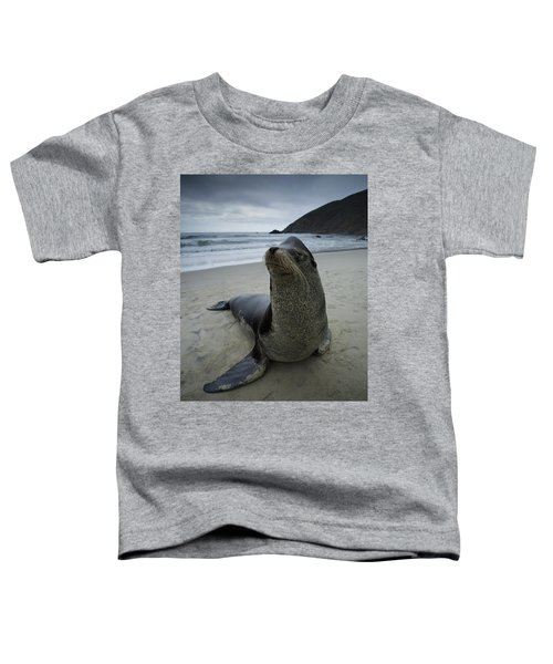 Big Seal Toddler T-Shirt