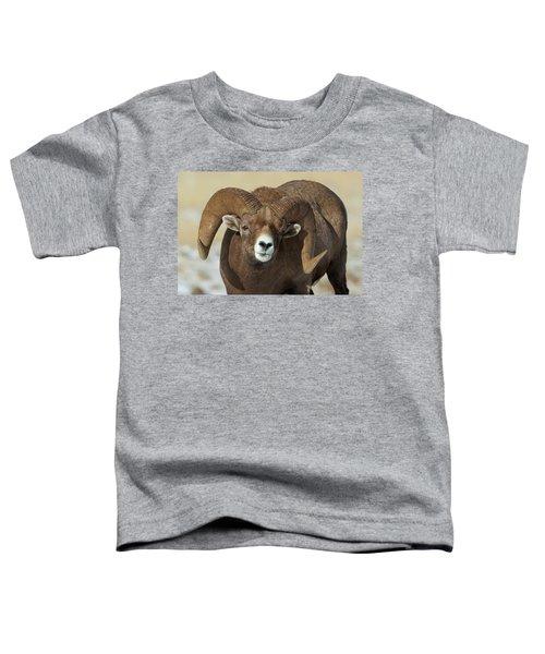 Bighorn Ram In Montana Toddler T-Shirt