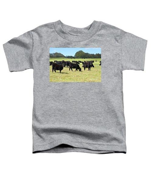Black Angus Steers Toddler T-Shirt
