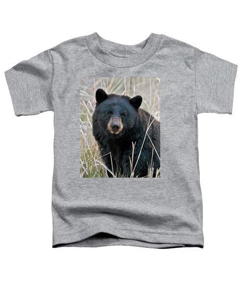 Black Bear Closeup Toddler T-Shirt