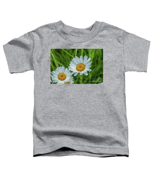 Black-headed Daisy's Toddler T-Shirt