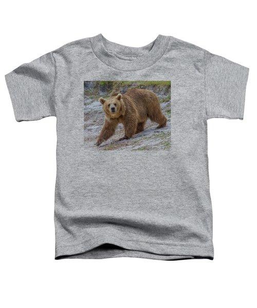Brown Bear 3 Toddler T-Shirt