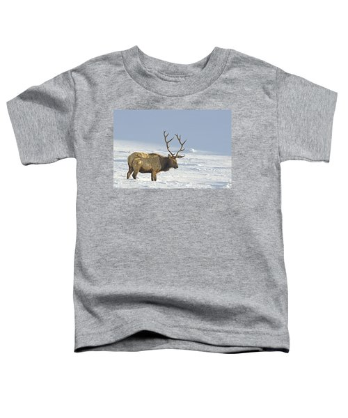 Bull Elk In Snow Toddler T-Shirt