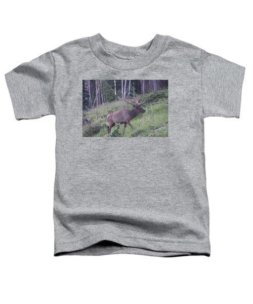 Bull Elk Rocky Mountain Np Co Toddler T-Shirt