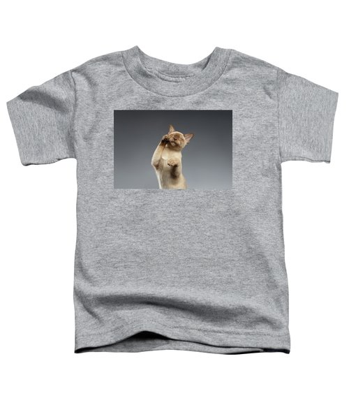 Burma Cat Paws Snout Covers On Gray Toddler T-Shirt