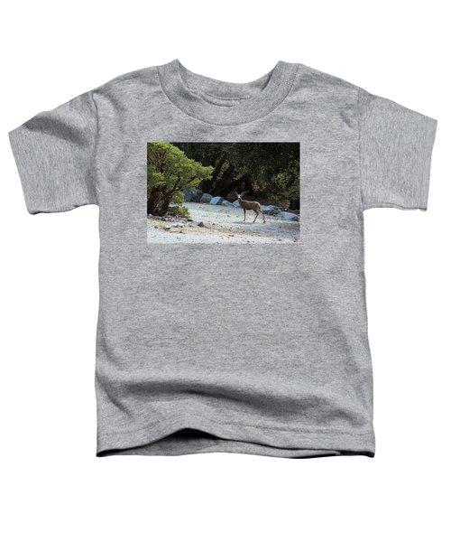 California Mule Deer Toddler T-Shirt