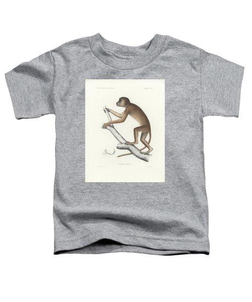 Central Yellow Baboon, Papio C. Cynocephalus Toddler T-Shirt