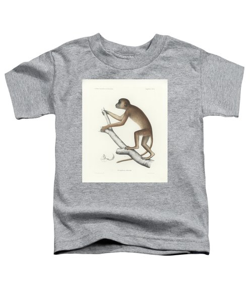 Central Yellow Baboon, Papio C. Cynocephalus Toddler T-Shirt