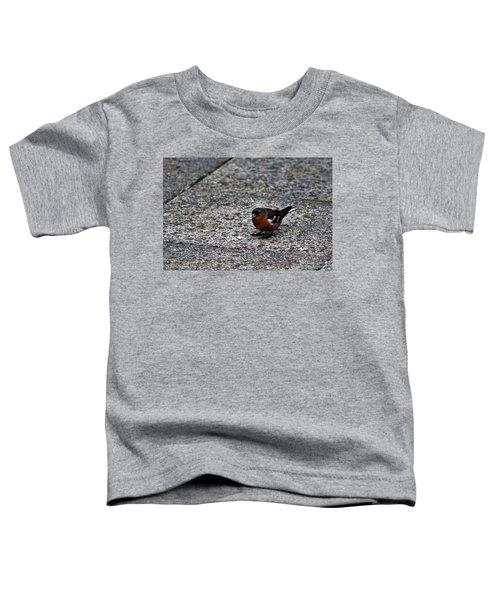 Chaffinch Toddler T-Shirt