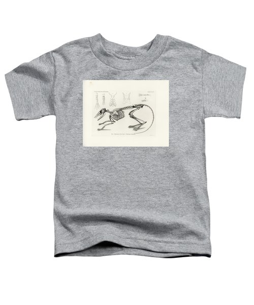 Checkered Elephant Shrew Skeleton Toddler T-Shirt