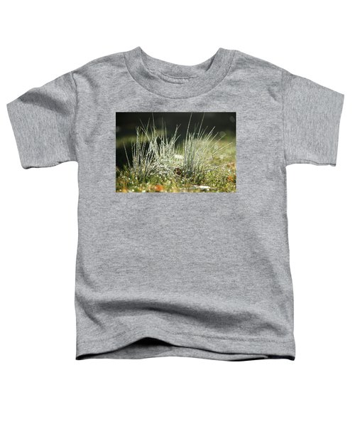 Close-up Of Dew On Grass, In A Sunny, Humid Autumn Morning Toddler T-Shirt