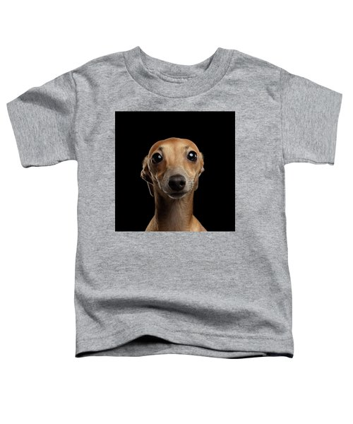 Closeup Portrait Italian Greyhound Dog Looking In Camera Isolated Black Toddler T-Shirt