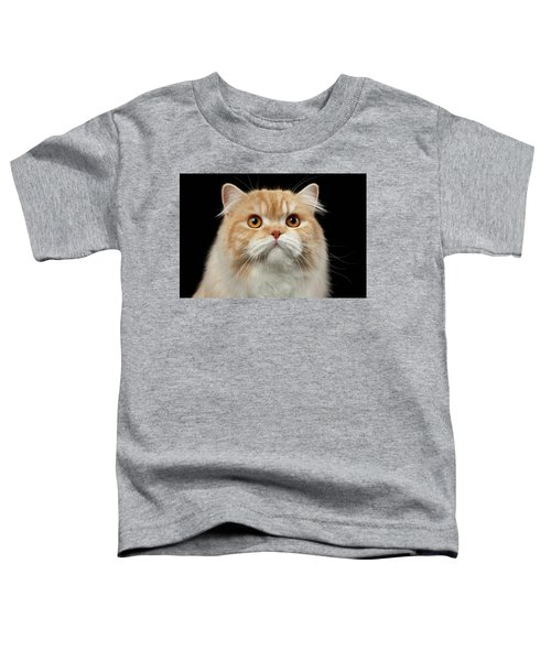 Closeup Portrait Of Red Big Persian Cat Angry Looking On Black Toddler T-Shirt