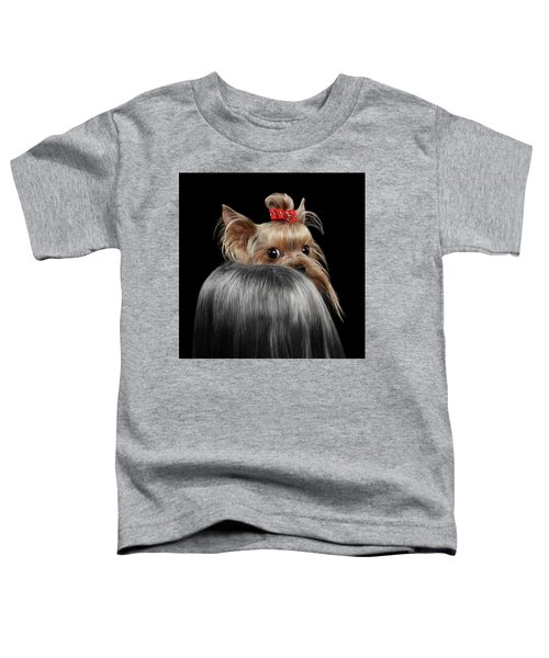 Closeup Yorkshire Terrier Dog, Long Groomed Hair Pity Looking Back Toddler T-Shirt