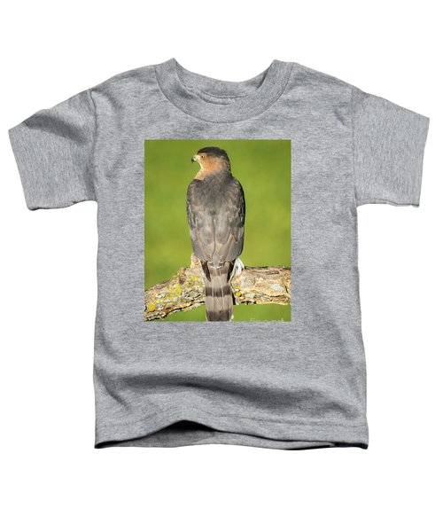 Cooper's Hawk In The Backyard Toddler T-Shirt