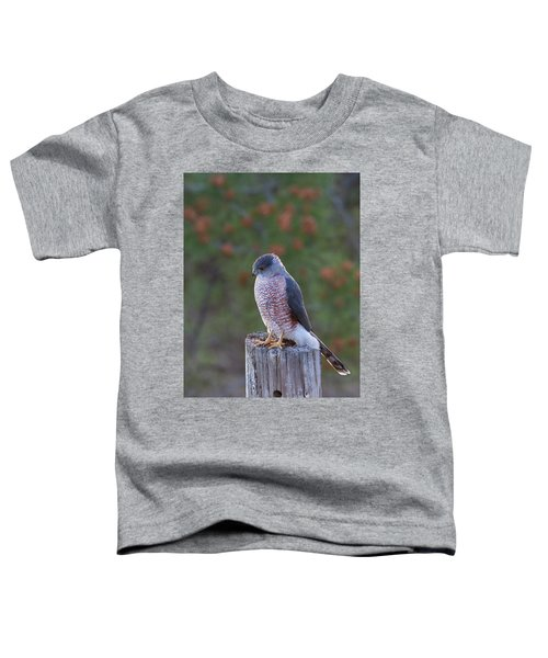 Coopers Hawk Perched Toddler T-Shirt