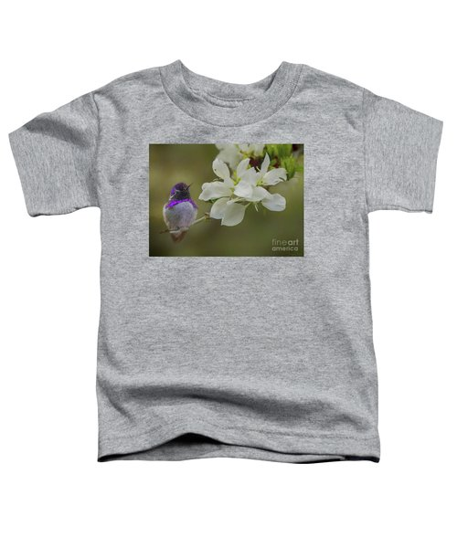 Costas Hummingbird On An Anacacho Orchid Branch Toddler T-Shirt