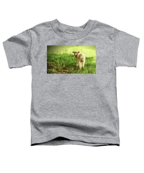 Cotswold Sheep Toddler T-Shirt