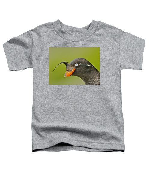 Crested Auklet Toddler T-Shirt