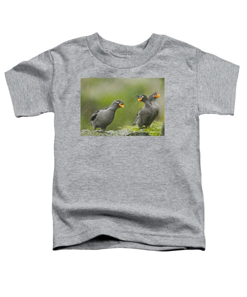 Crested Auklets Toddler T-Shirt