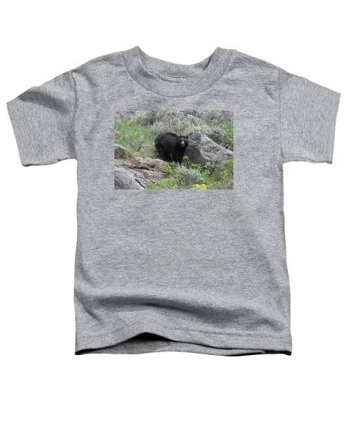 Curious Black Bear Toddler T-Shirt