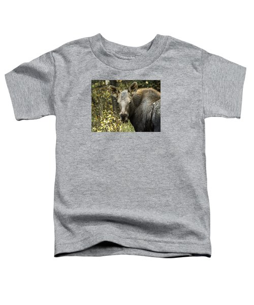 Curious Calf Toddler T-Shirt