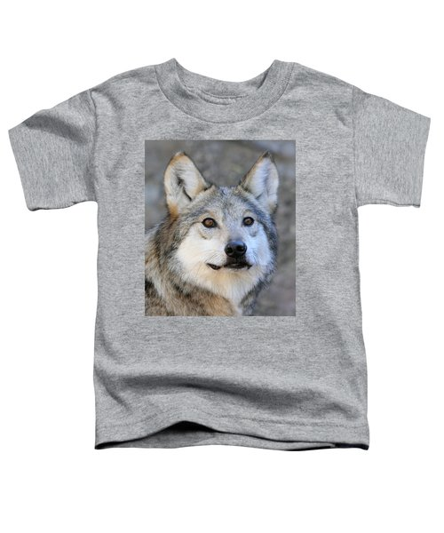 Curious Wolf Toddler T-Shirt