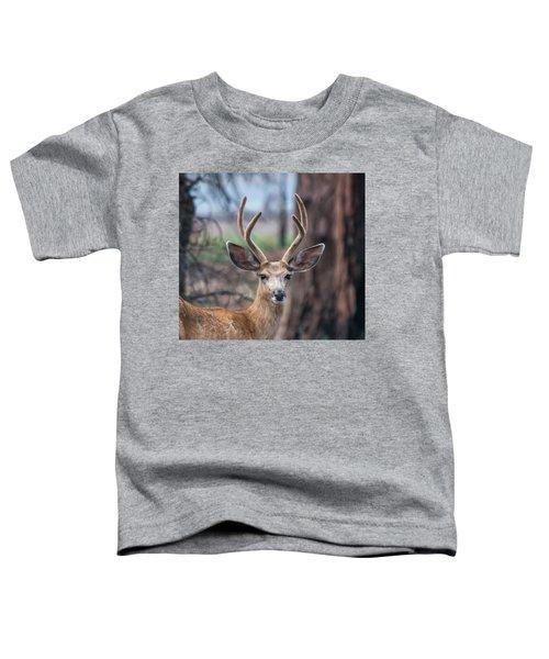 Deer Stare Toddler T-Shirt