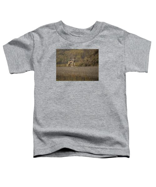 Denali Park Wolf Toddler T-Shirt
