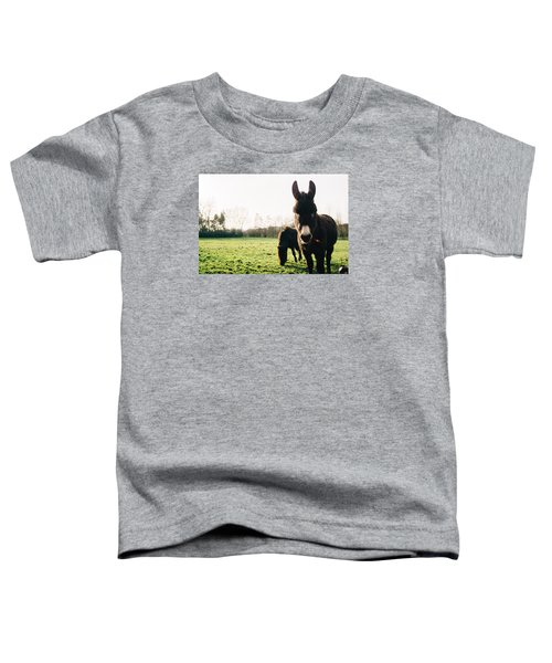 Donkey And Pony Toddler T-Shirt by Pati Photography