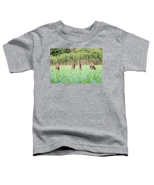 Elk Calves Toddler T-Shirt