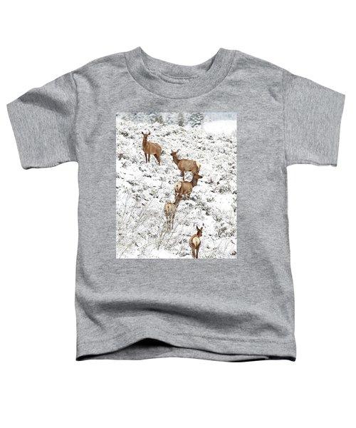 Elk Cows In Snow Toddler T-Shirt