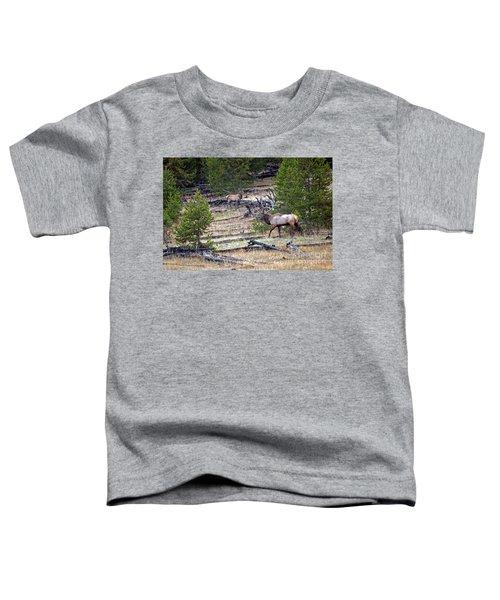 Elk In Yellowstone Toddler T-Shirt