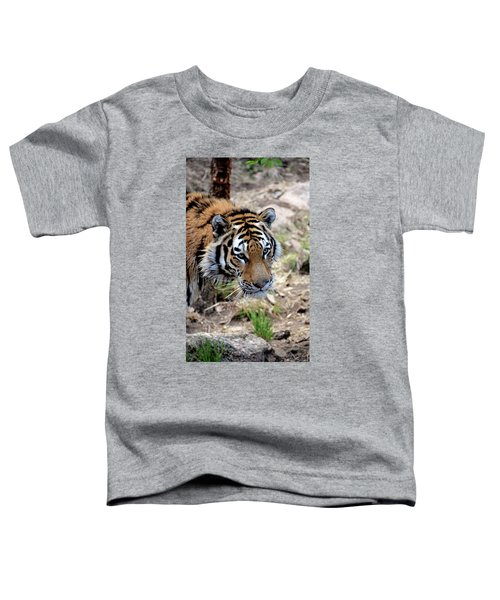Feline Focus Toddler T-Shirt
